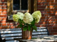 flowers-3029416